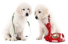 Вызов ветеринара на дом — отличная услуга
