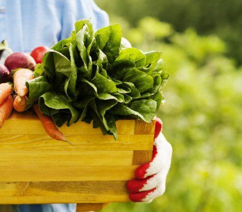 Как выбирать органические продукты?