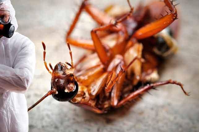 Как помогает служба по уничтожению тараканов?